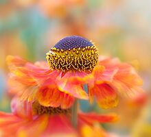 Sneezeweed flower by Jacky Parker