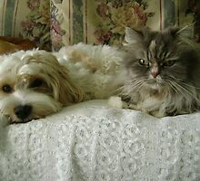 chloe and minnie :-) by chrissy mitchell
