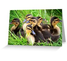 Ducklings snuggled together Greeting Card