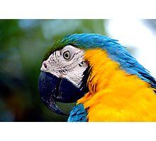 Parrot II Photographic Print