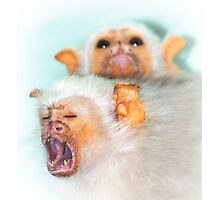 Screaming Monkey Photographic Print