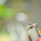 The Hummingbird II by NinaBees