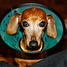 Lucy & The Cone Of Shame by NinaBees