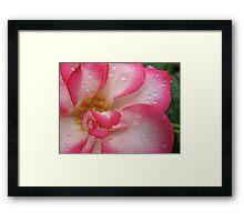 Amusing rose Framed Print