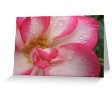 Amusing rose Greeting Card