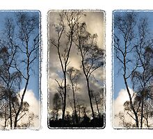 Tryptic Trees by rubyrainbow