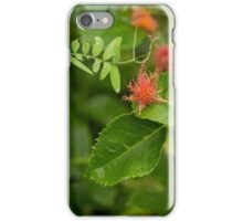 Plant with insect galls  iPhone Case/Skin