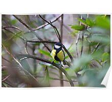 Woodland wildlife Poster