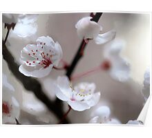 Plum Blossoms in the Japanese Garden Poster