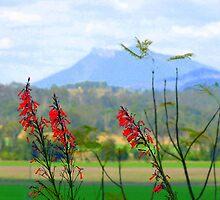 Onion Fields, via  Boonah Qld. by Virginia McGowan
