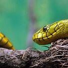 Snake Eye by SuddenJim