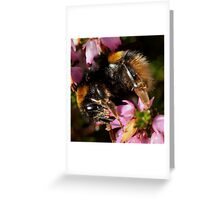 i-Bee-ok Greeting Card