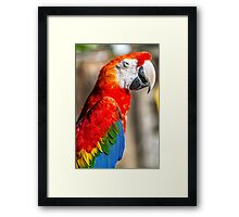 Red Macaw Framed Print