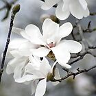White Blossom by astonishann