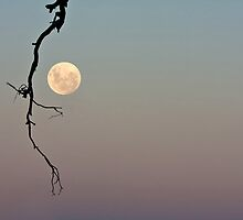 Supermoon by Barb Leopold