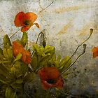 Poppies from Italy by Rene Hales
