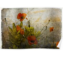 Poppies from Italy Poster