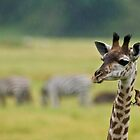 Giraffe in the Rain! by Raymond J Barlow
