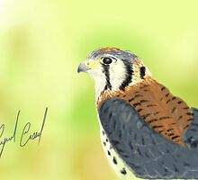 Kestrel - Sketched on an iPad by Ray Cassel