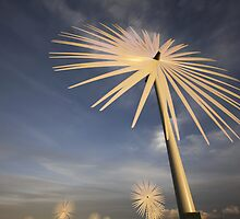Wind Flower by southsideimages