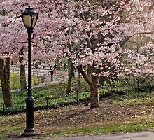 Pink Spring Blooms -Central Park by photographist