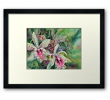Orchid Series 13 Framed Print