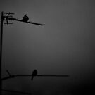Neighbours in Grey by petejsmith