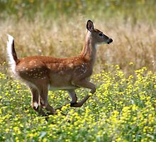 White-tailed Deer Fawn by Al Mechler