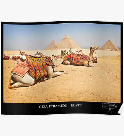 { camels in egypt } Poster