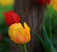 Petals by James L. Brown