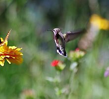 A Hummingbird Waiting In Line by Al Mechler