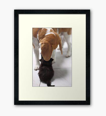 Flash meets Oreo Framed Print