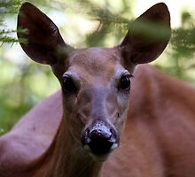 Up Close With a White-tailed Deer by Al Mechler