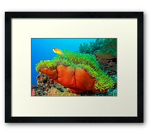Anemone with Pink Anemone Fish Framed Print