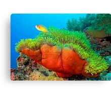 Anemone with Pink Anemone Fish Canvas Print