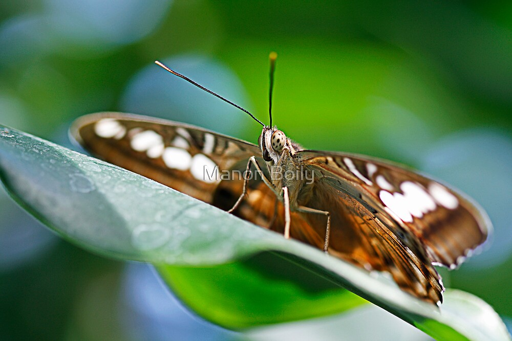 high on the leaf by Manon Boily