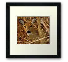Peek A Boo (White-tailed Deer) Framed Print