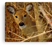 Peek A Boo (White-tailed Deer) Canvas Print