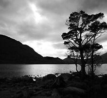 Standing Tree by Paul McSherry