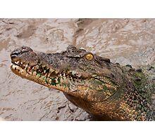 Nesting Croc Photographic Print