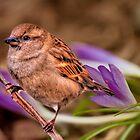 Spring Song by LudaNayvelt