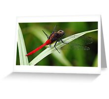 Ready for Take Off Greeting Card