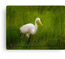 Great Catch Egret Canvas Print