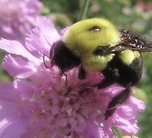 Im a bee! by LisaDU