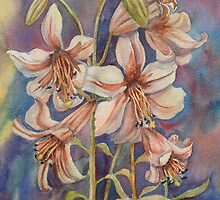 Hi Lily, Hi Lo (Greenhouse Lilies) by bevmorgan