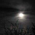 beware of the dark by katpartridge