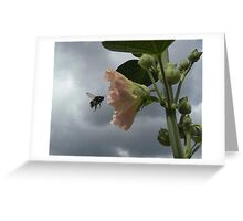 The Flight of the Bumble Bee.... Greeting Card