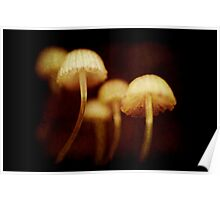 tiny toadstools Poster