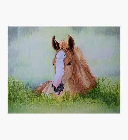 """""""Young Flame"""" - Criollo colt Photographic Print"""