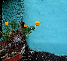 emphatically not a wallflower by Helena Bolle